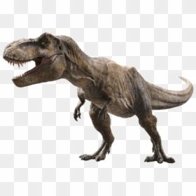 Tyrannosaurus Rex Film Jurassic Park T Rex Png Transparent Png 1019x784 Png Dlf Pt Velociraptor jurassic park mosasaurus dinosaur ingen, mosasaurus jurassic world, whale dinosaur png clipart. tyrannosaurus rex film jurassic park